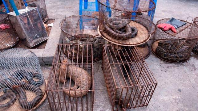 mercado humedo de animales