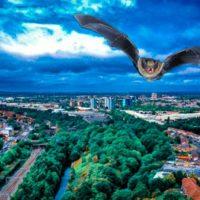 impacto ecologico de la luz artificial en murcielagos urbanos