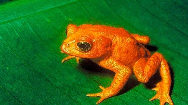biodiversidad de anfibios