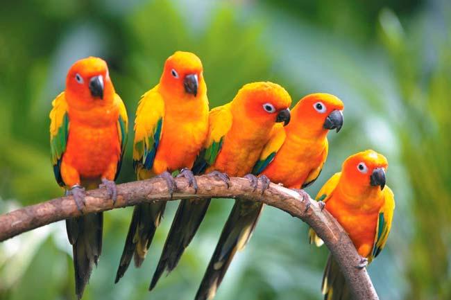 biodiversidad de aves