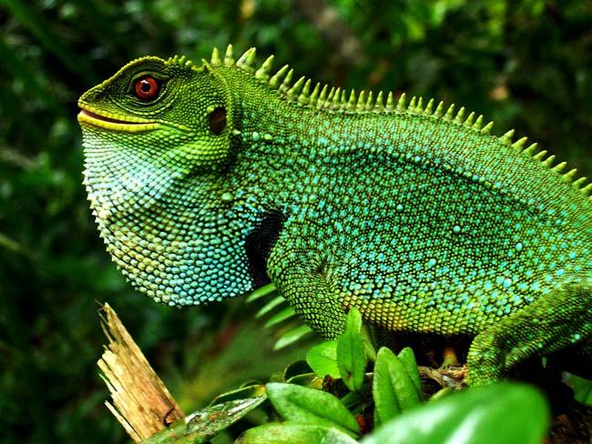 Biodiversidad de reptiles