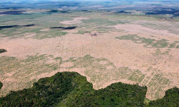 consecuencias Covid19 en Medio Ambiente