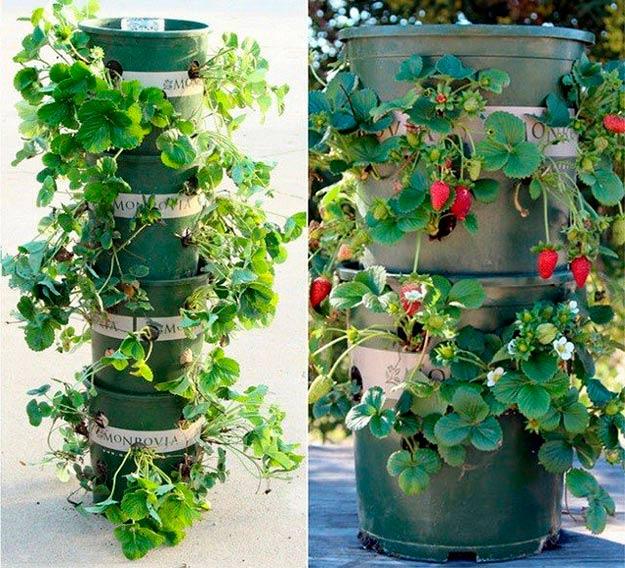 huerto vertical de fresas en torre