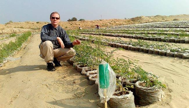 convertir arena del desierto en suelo fertil