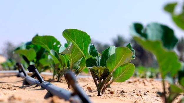 pruebas Liquid Nanoclay convertir desierto en suelo fertil