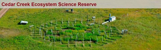 estudio cientifico plantas C3 vs C4 frente al CO2 elevado