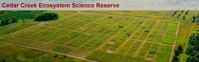 campo parcelas especies de plantas C3 y C4