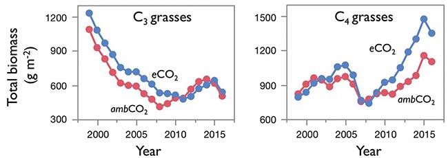 graficas respuestas plantas C3 vs C4 frente al CO2 elevado