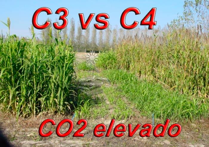 plantas C3 vs C4 frente al CO2 elevado Portada