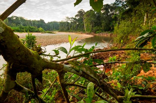 bosque tropical area protegida