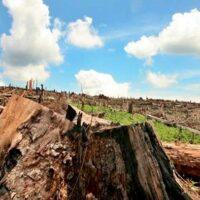 un tercio de las areas protegidas del mundo estan deterioradas portada