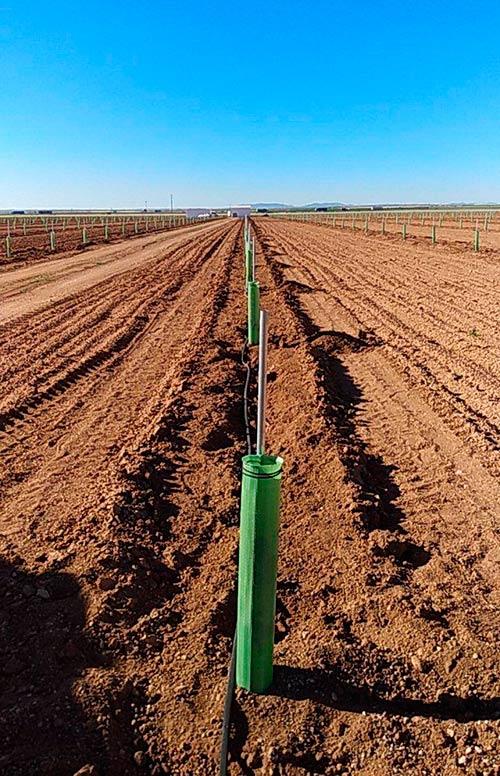 plantar pistachos en campo con tutor