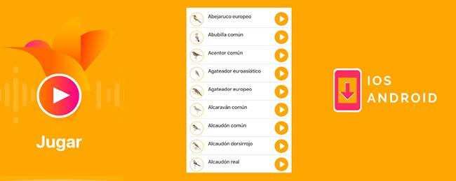 app Avefy juego