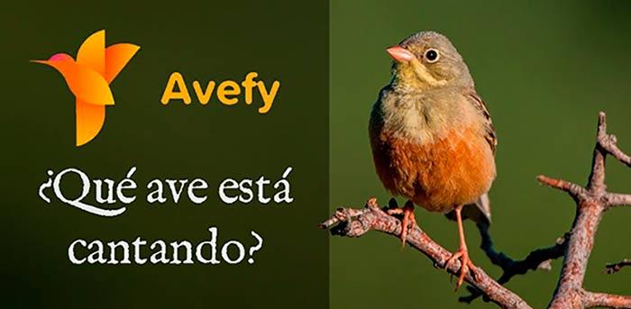 Avefy portada