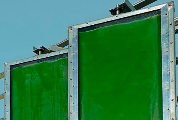 uso de algas para obtener electrcidad BPV