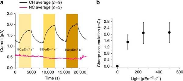graficas cianobacterias impresas Figura 3