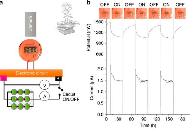 Prueba alimentacion reloj digital Figura 4