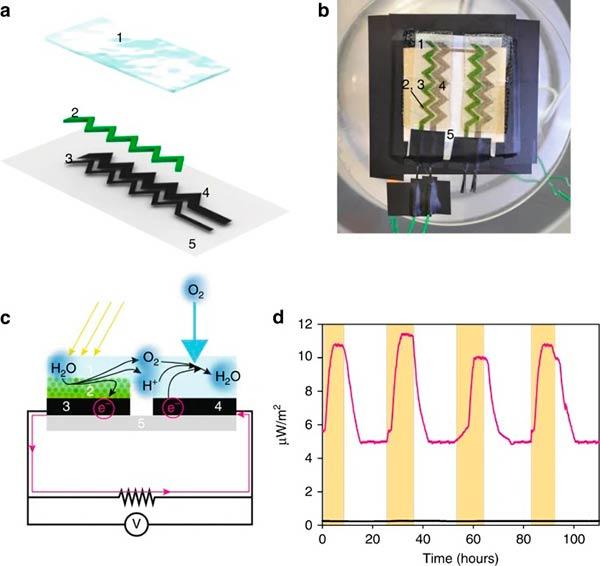 biofotoelectrodos de cianobacterias impresas