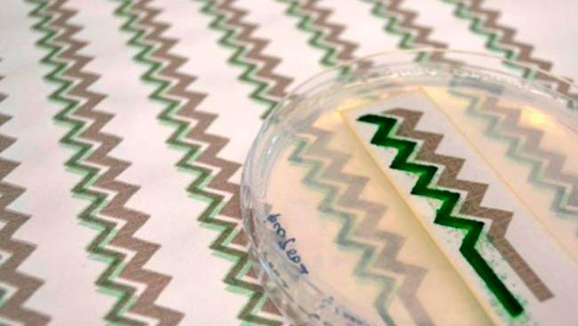 cianobacterias impresas