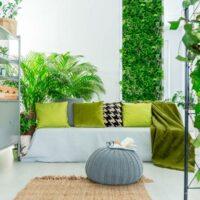 plantas para el dormitorio portada