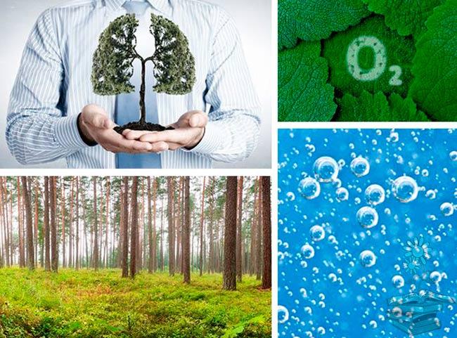 Ciclo del oxígeno pasos, fotosintesis