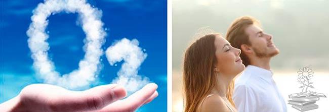 ciclo del oxigeno etapas, respiracion