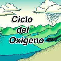 ciclo del oxigeno portada