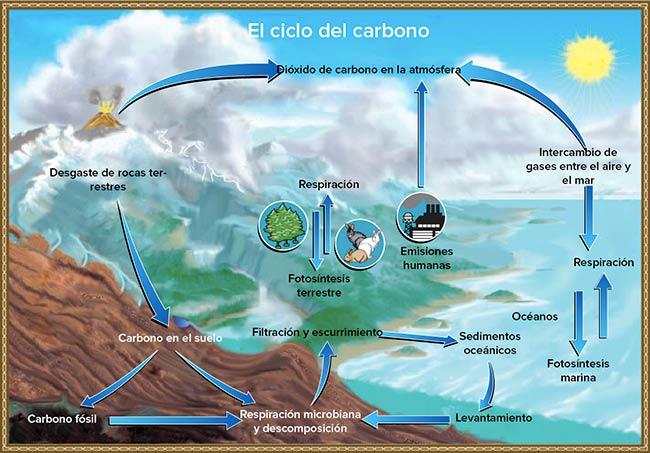 ciclo del carbono biogeoquimico
