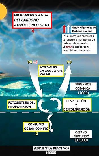 ciclo biogeoquimico del carbono en el mar