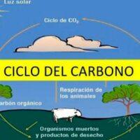 ciclo del carbono portada