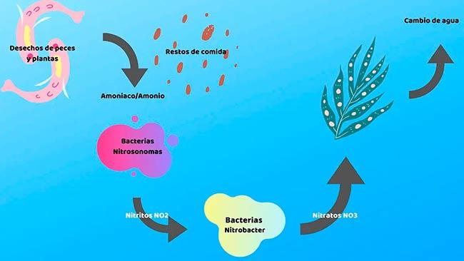esquema del ciclo biogeoquimico del nitrogeno en el agua