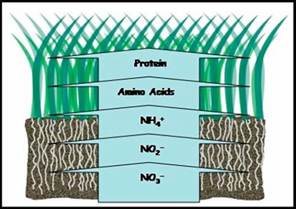 ciclo biologico del nitrogeno