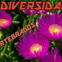 diversidad de invertebrados en Carpobrotus edulis nativo e invasor Portada