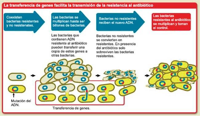 resistencia en bacterias a antibioticos