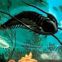 perdida de oxigeno marino acabo con los primeros animales Portada