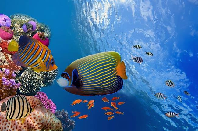 biodiversidad Sistema de Reservas de la Barrera del Arrecife de Belice