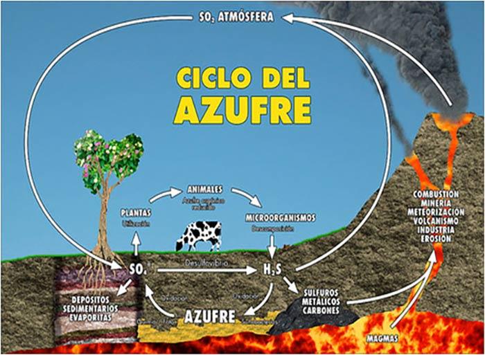 ciclo del azufre portada