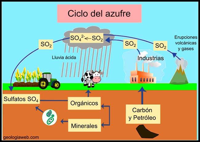 El ciclo del azufre resumen