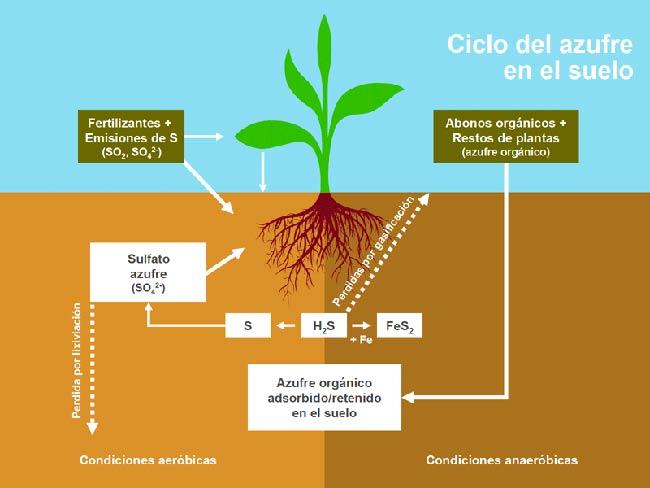 ciclo del azufre en el suelo