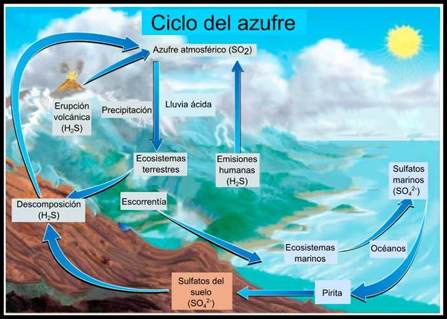 ciclo del azufre esquema