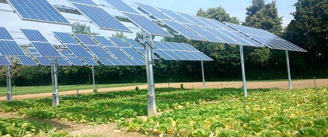 energia agrovoltaica