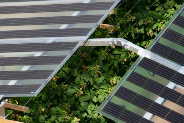 paneles solares bifaciales