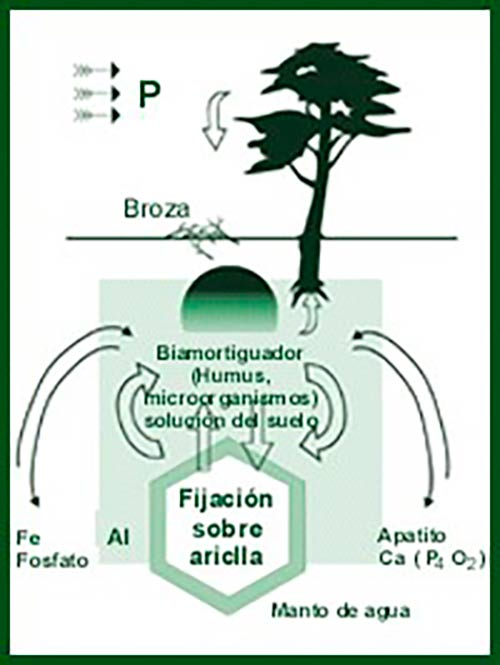 ciclo biogeoquimico del fosforo en el suelo