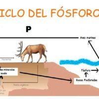 ciclo del fosforo portada