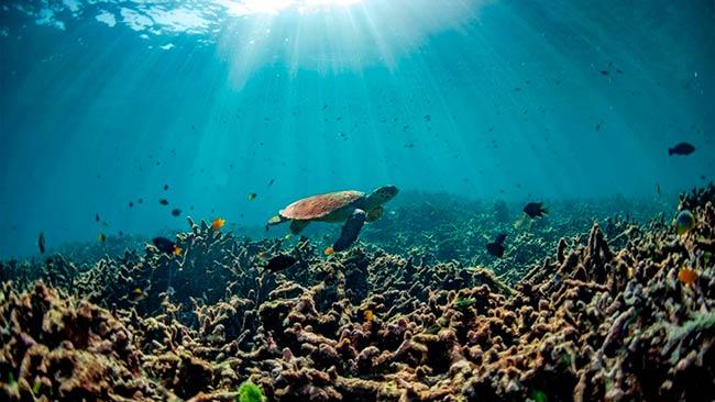 consecuencias acidificacion de los oceanos