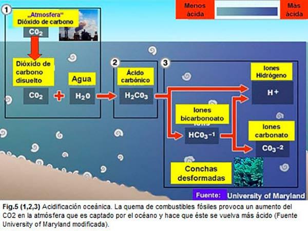 acidificacion del oceano esquema