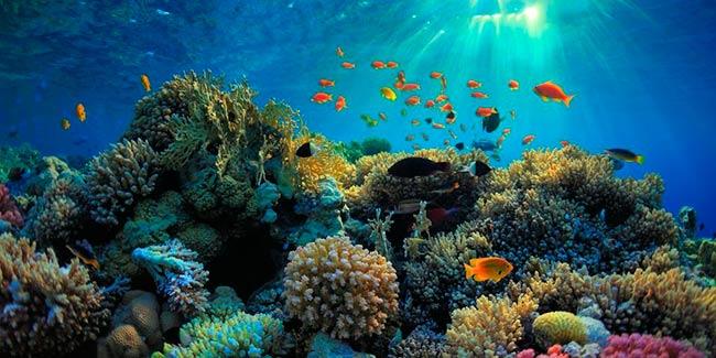 acidificacion del mar efectos