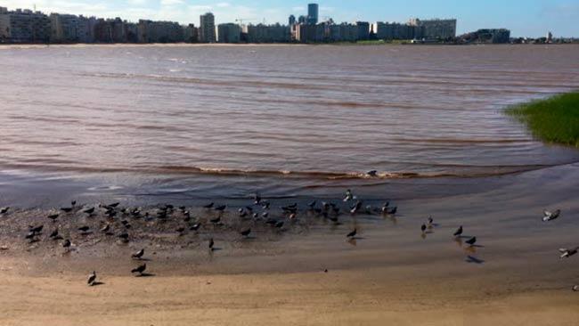 plastisfera estuario rio de la plata