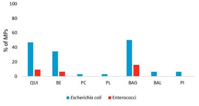 bacterias fecales en microplasticos estuario rio de la plata