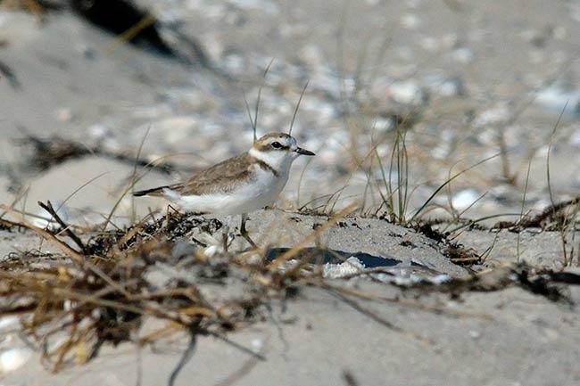 aves parque natural de corrubedo